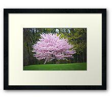 Cherry Blossom Time Framed Print