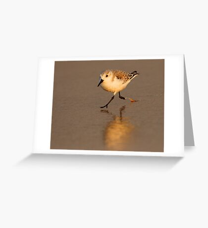 Sandpiper Running on Beach Greeting Card