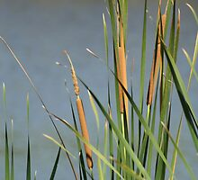 Cat Tails by Virginia N. Fred