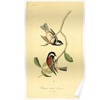 James Audubon Vector Rebuild - The Birds of America - From Drawings Made in the United States and Their Territories V 1-7 1840 - Chesnut Backed Titmouse Poster