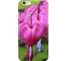Fuchsia Bleeding Hearts iPhone Case/Skin