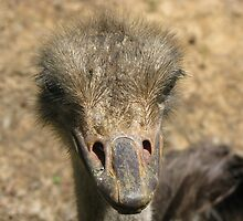 Ossie The Ostrich by feathertouch