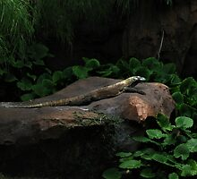 Sitting Lizard by terrebo