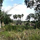 Safari Elephant by terrebo
