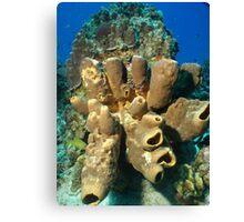 Coral Head Canvas Print