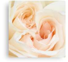 A Double Hearted Romantic White Rose Canvas Print