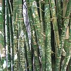 Bamboo with graffiti, Botannical Gardens Adelaide by HandyAndy