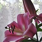 Lily and lace  by Lozzar Flowers & Art