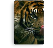 The Sumatran Tiger Canvas Print
