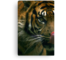 The Sumatran Tiger Canvas Print