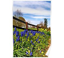 Bluebells & Daffodils  Poster