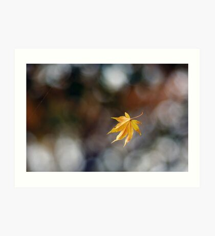 Leaf Caught in Web Art Print