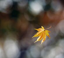 Leaf Caught in Web by Karen Checca