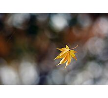 Leaf Caught in Web Photographic Print