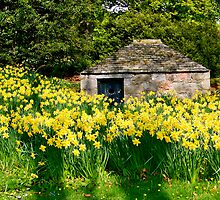 Dwelling Among The Daffodils  by Larissa  White Brown