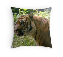 Sumatran Tiger awaits dinner Throw Pillow