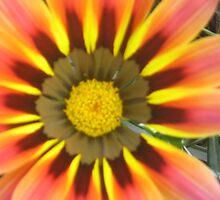 sunny flower  by Roseanna