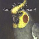 Duke, portrait of a cockatiel by Cindy Schnackel