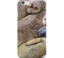 Elephant seal colony iPhone Case/Skin