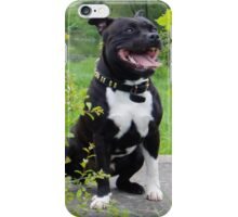 Staffordshire Bull Terrier Dog iPhone Case/Skin