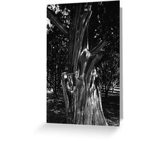 Tree Study Greeting Card
