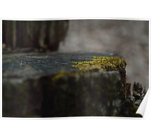 Sat Upon the Mossy Log Poster