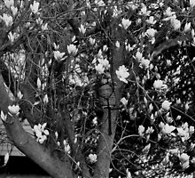 Spring blooms in black and white by mltrue