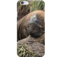 Southern Elephant Seal iPhone Case/Skin