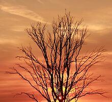 MORNING HAS BROKEN by Paul Cavanagh