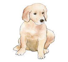 Golden Puppy by ZiggyToes
