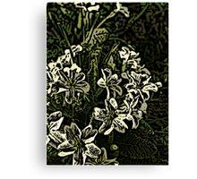 Primrose  Canvas Print