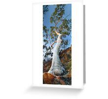 Ghost Gum tree Greeting Card