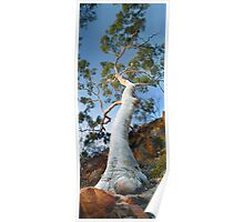 Ghost Gum tree Poster
