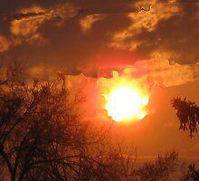 A Bright Shining Sun by Linda Miller Gesualdo