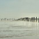 Spurn Point Groynes by Sarah Couzens