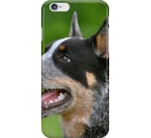 Blue Cattle dog with a black iPhone Case/Skin