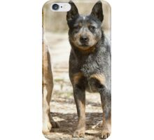Australian Cattle Dog iPhone Case/Skin