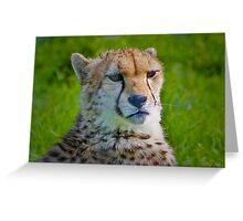 Cheetah....... Greeting Card