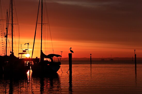Good Morning Western Port by Patricia Gibson