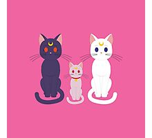 Sailor Cats Photographic Print