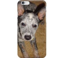 Australian Cattle Dog 2.5 iPhone Case/Skin