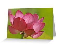 Pink Lotus W/Green Bkgd Greeting Card