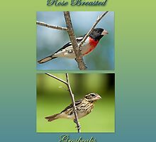Rose-Breasted Grosbeak Pair by Bonnie T.  Barry