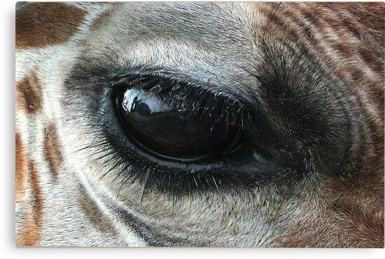 See It Through My Eyes by Cheri Bouvier-Johnson