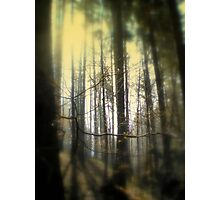 Mysterious Wood Photographic Print