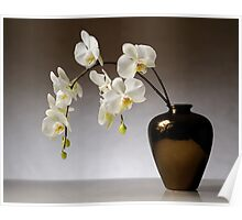 "Moth Orchid ""Phalaenopsis"" Poster"