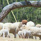 All We Like Sheep ...   by Rick  Todaro