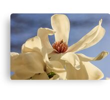 Locust Flower Canvas Print