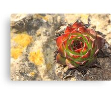 Colorful Cacti Canvas Print