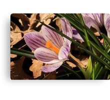 Springing Forth Canvas Print